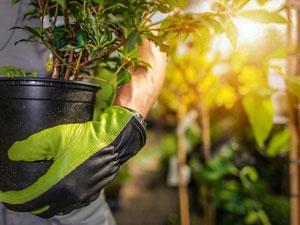 prestation livraison de plantes